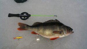 Dagens största fisk var denna fina abborre som vägde 706 gram. Som pris fick Johan Tikkanen en fin julskinka.